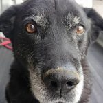 家族に大切なことを教えてくれた愛犬とお別れして1年が経ちました