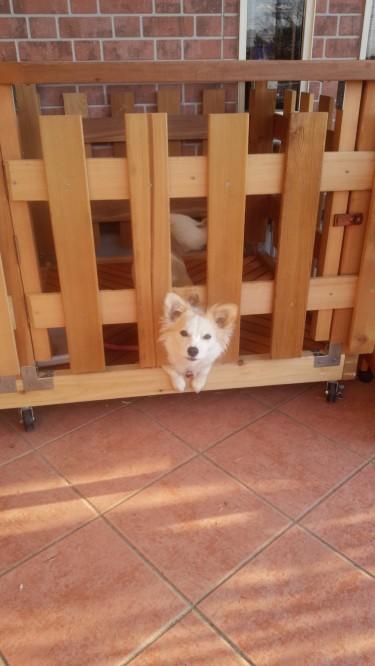 犬舎 レッドシダー