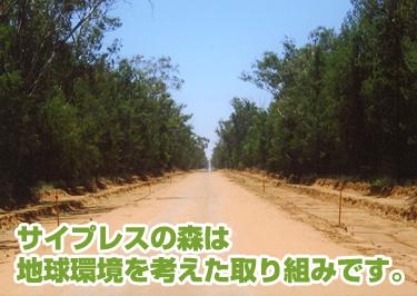 サイプレスの森は地球環境を考えた取り組みです。