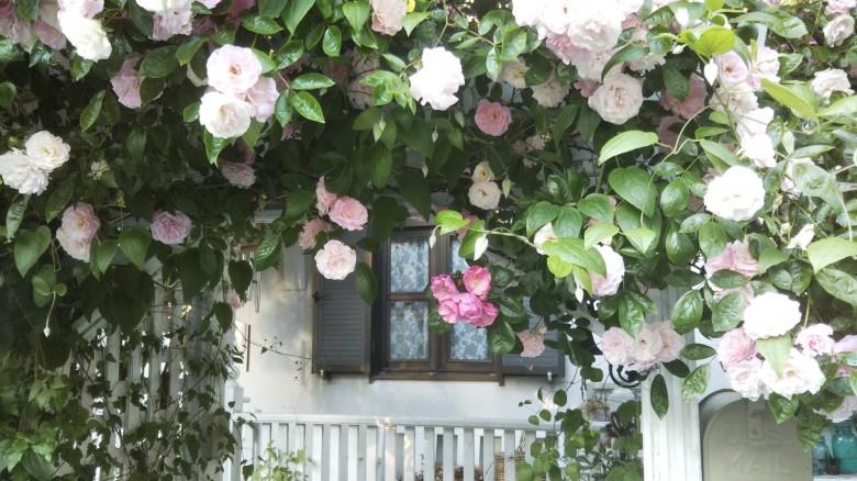 白く塗装したバラのアーチが迎えてくれるお庭(レッドシダー)
